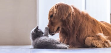 advantage_for_cats_dogs_thumbnail